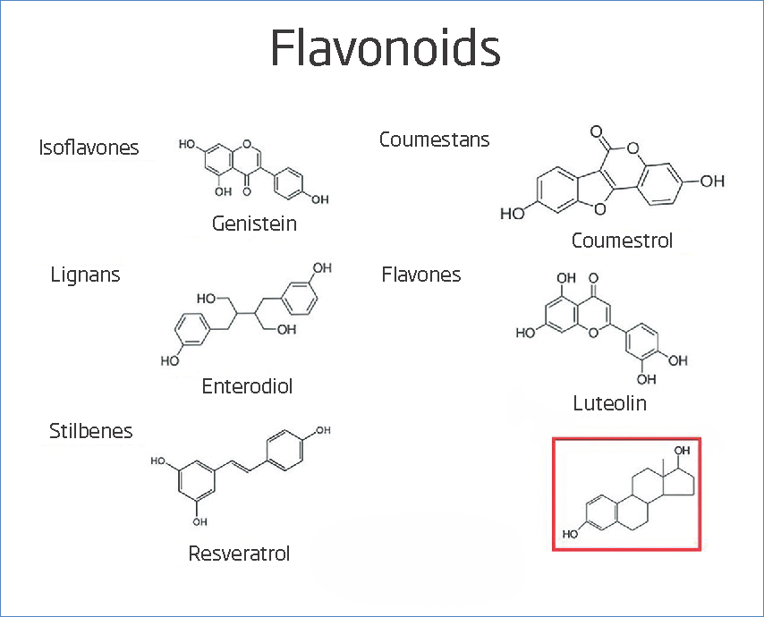 The five groups of flavonoids compared to 17estradiol.