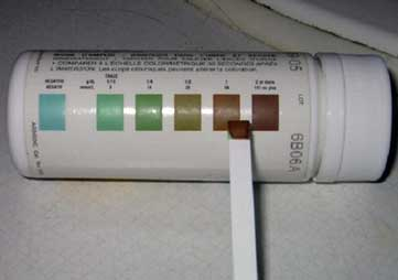 Urine dipstick for hemoglobin in urine showing positive color change.