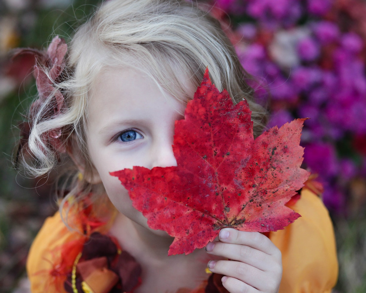 一個笑容甜美的金髮小女孩,把半邊臉遮在楓葉之後,對著鏡頭微笑。