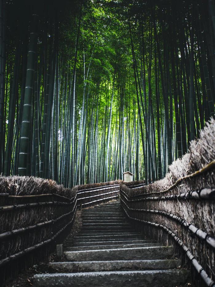 竹の日本の木