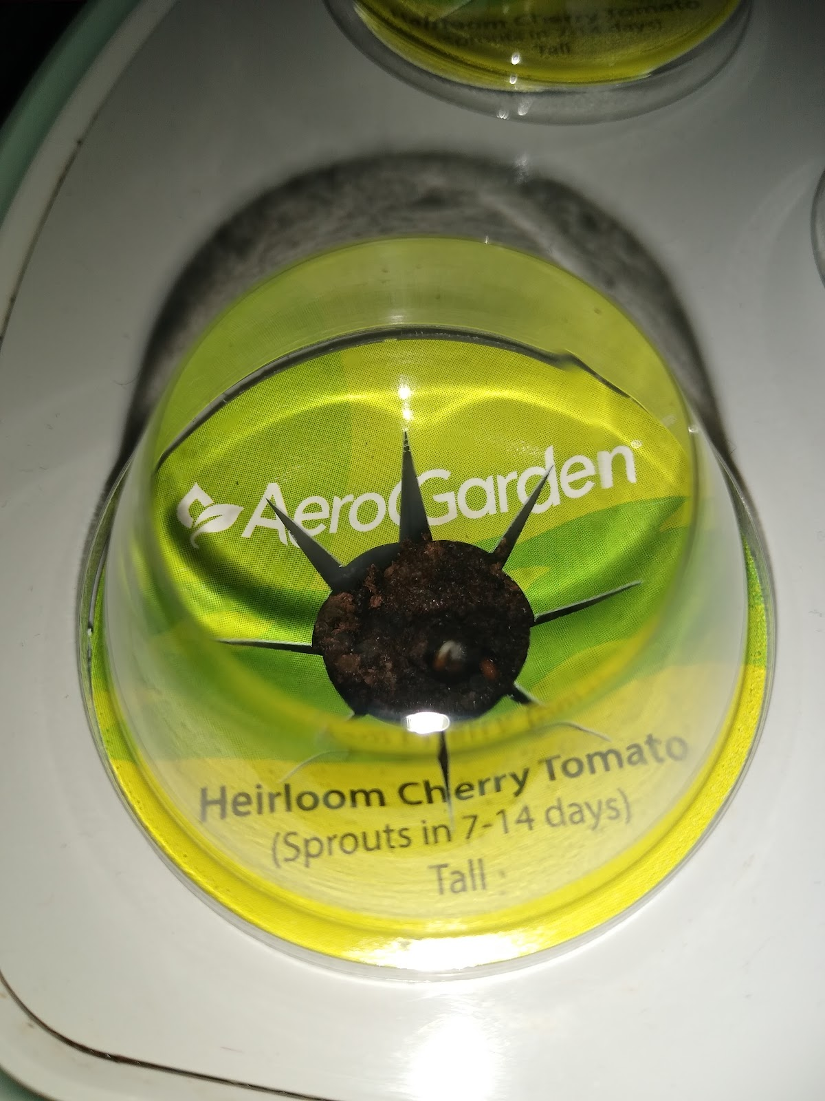 tiny tomato plant sprout in an aerogarden