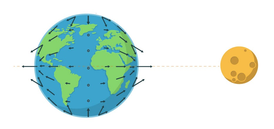 the Moon's gravity has a dynamic effect on water currents all around planet Earth. Arrows represent the gravitational force of the moon relative to the gravity at the center of the Earth | Image: Maria Gorohovski and Liat Marcus, according to: W.S. von Arx, An Introduction to Physical Oceanography