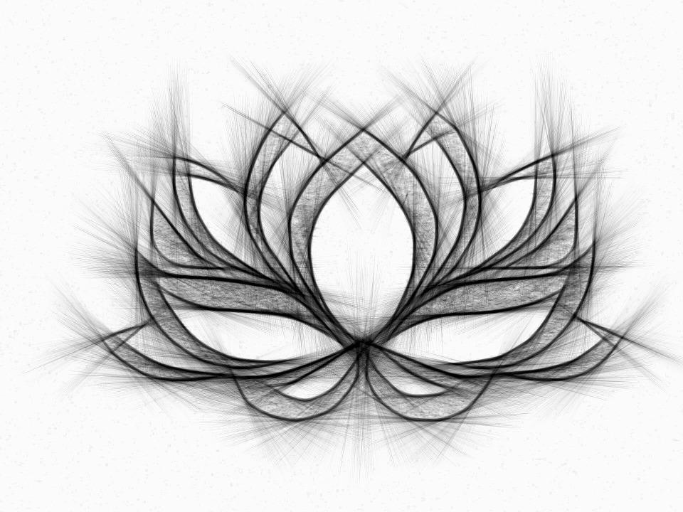 Water Lily, Drawing, Pencil,