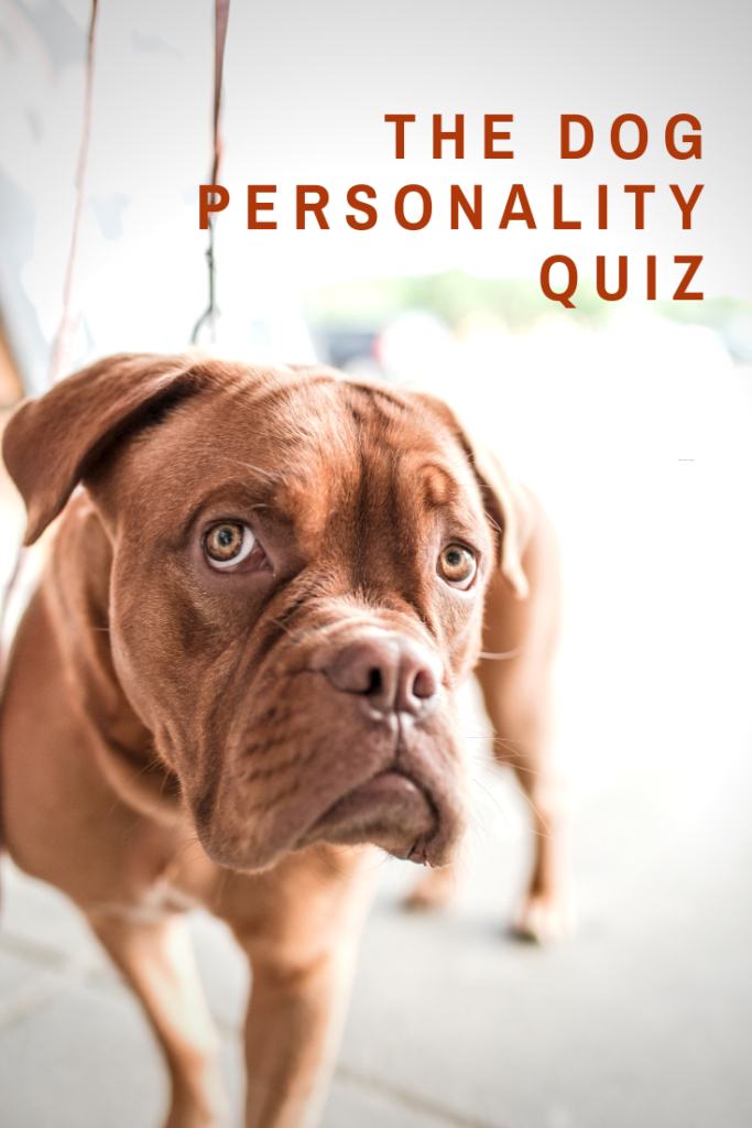 Dog training | Understand how to motivate your dog's unique personality!