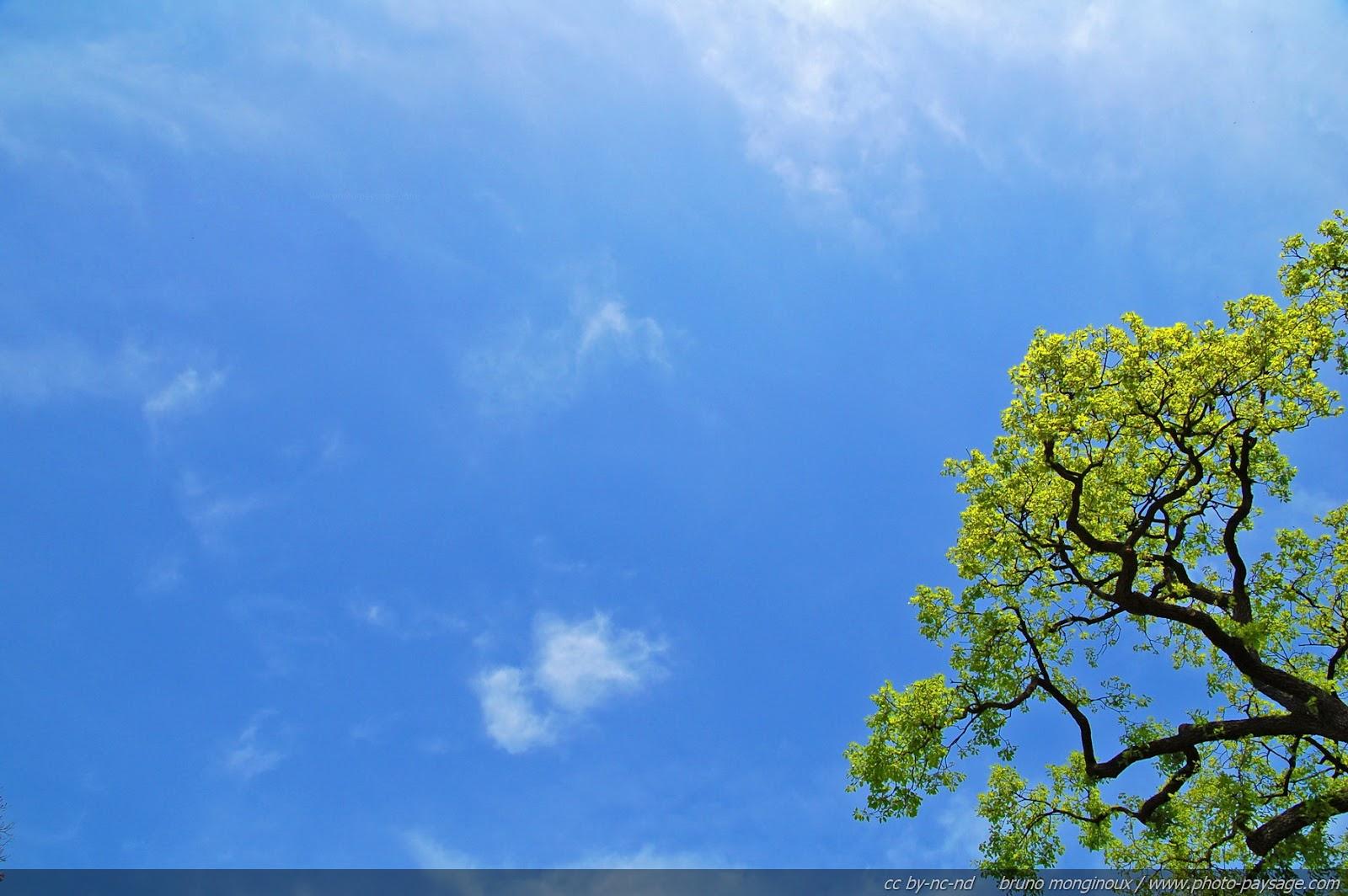 Oak_tree_in_the_spring-2.jpg