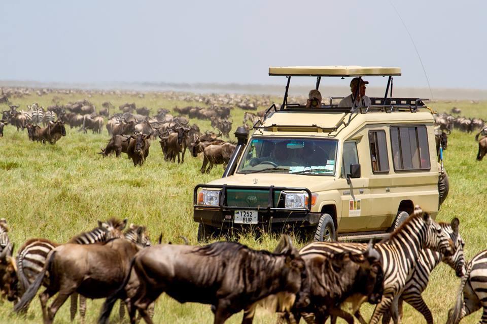 Safari in Lake Manyara.jpg