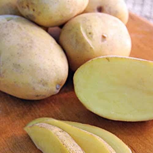 Daisy-Gold-Potatoes.jpg