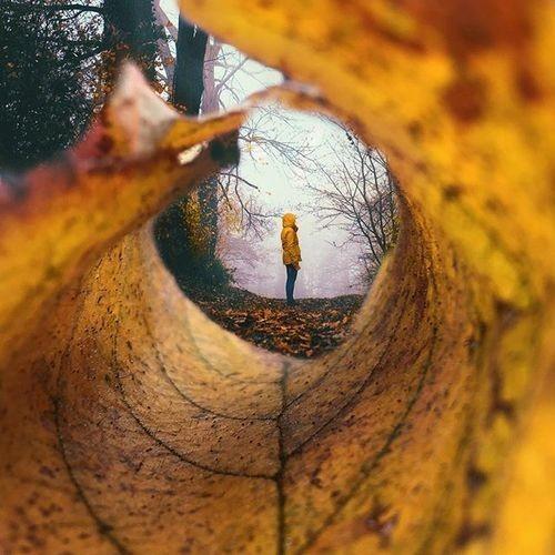 قابهای طبیعی در عکاسی