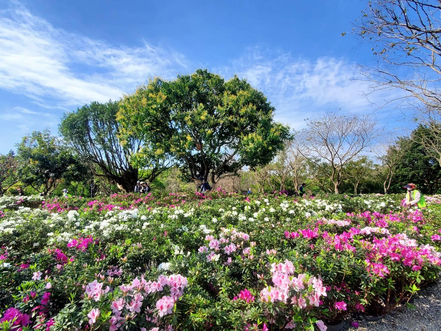 2021 台北杜鵑花季