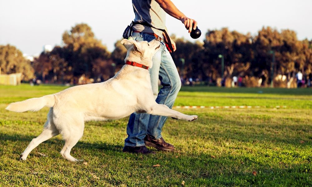Cách mua vòng cổ cho chó không gây hại đến sức khỏe thú cưng 2020