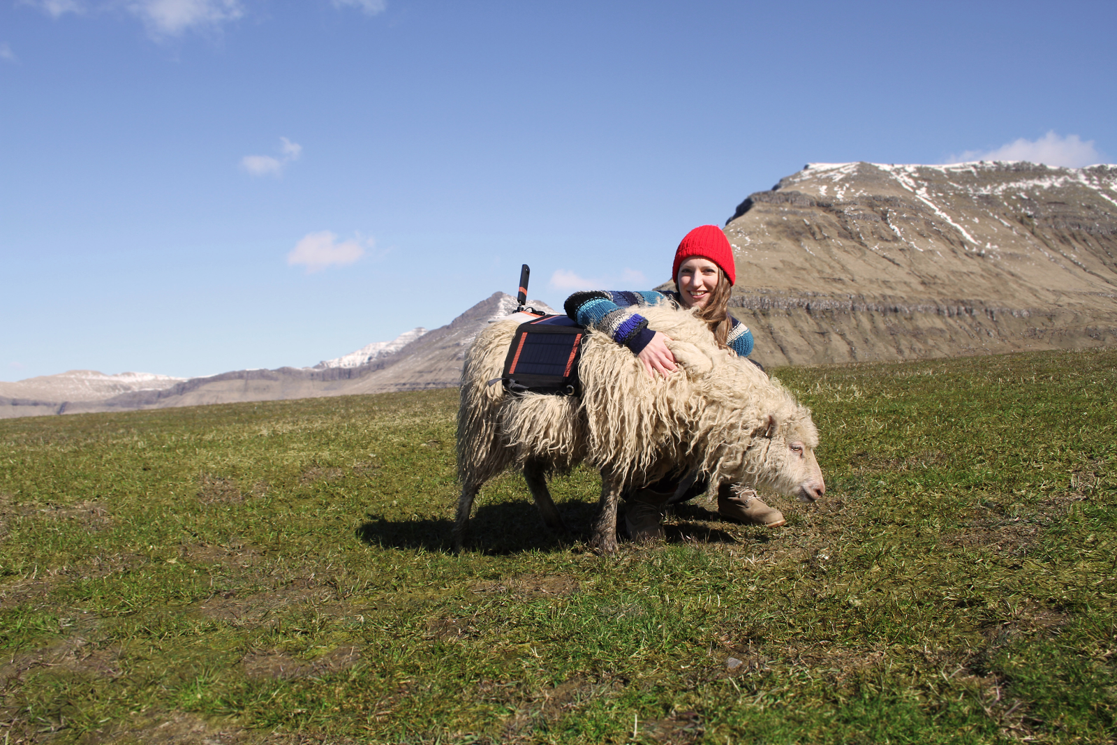 Когда оператор – овца: запечатлены волшебные виды Фарерских островов