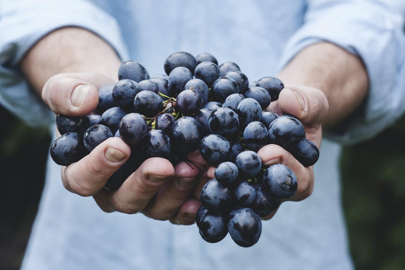 Um homem segurando um cacho de uva