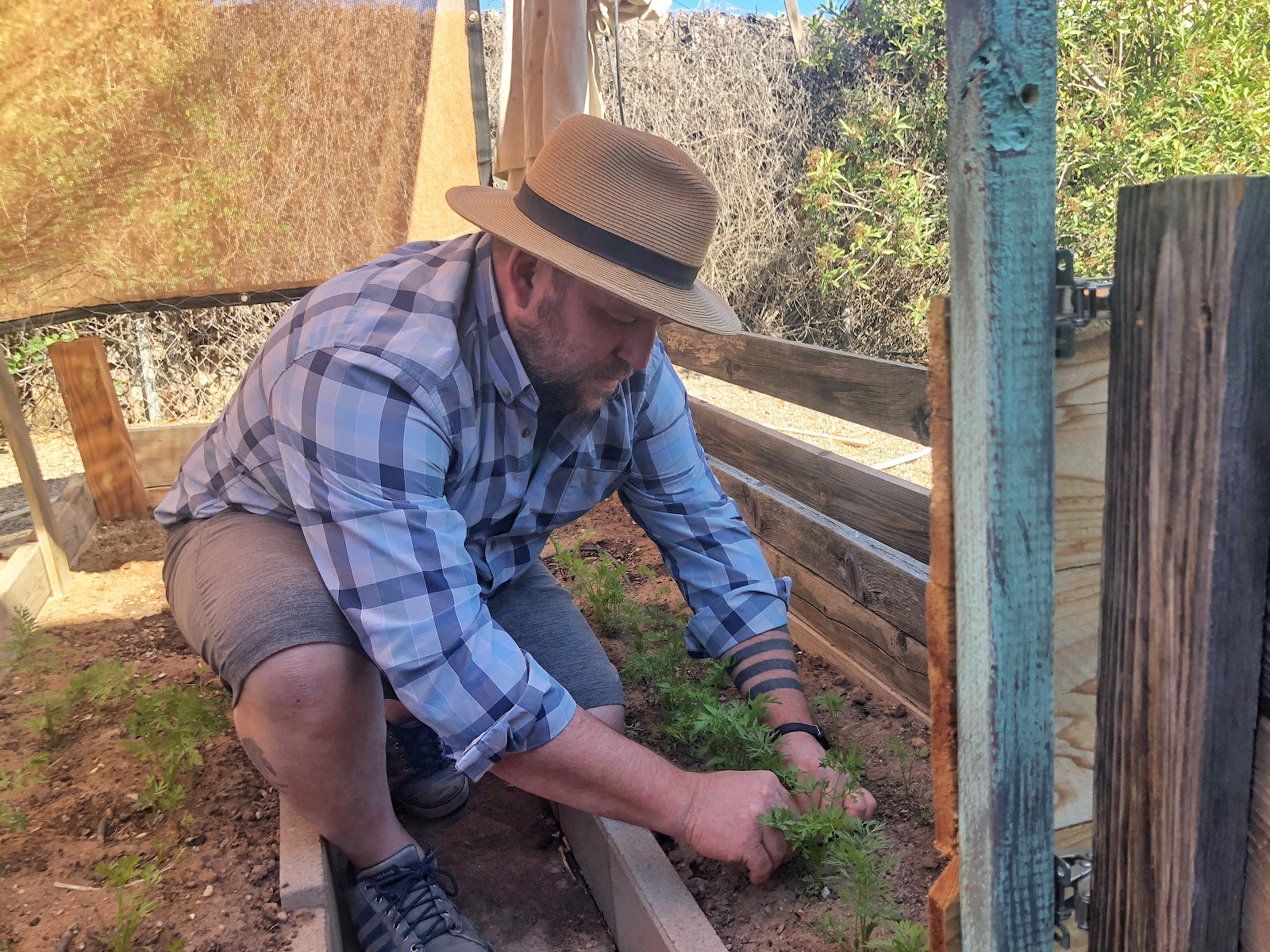 Team 1SE content creator Bruce Seaton thins carrots in his backyard vegetable garden in Albuquerque.