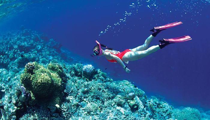 n ngắm san hô ở Hòn Mun