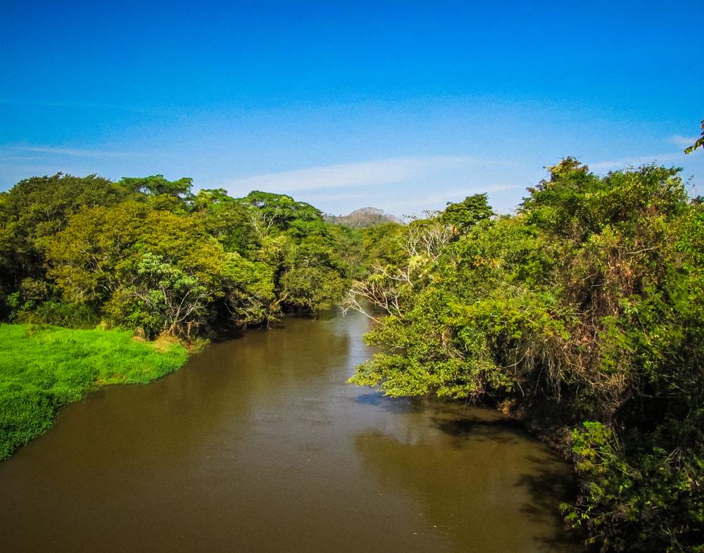 O protocolo permitiu a restauração de 132 mil hectares de áreas ciliares e de mais de 7 mil nascentes, além da produção de 46,7 milhões de mudas de árvores nativas. (Fonte: Shutterstock/Gustavo_Asciutti/Reprodução)
