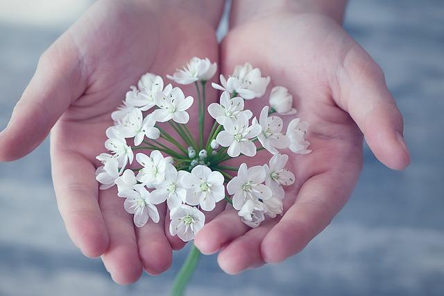 D:\網路下載圖庫\pixabay\flower-1283259_640.jpg