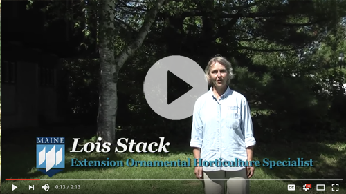 Video: Native Plants in Maine