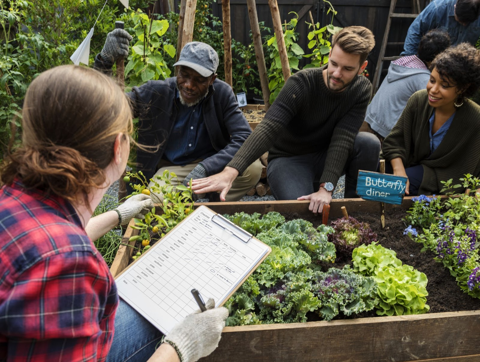 Image of people participating in community gardening. Group of people surrounding raised garden beds of leafy greens.