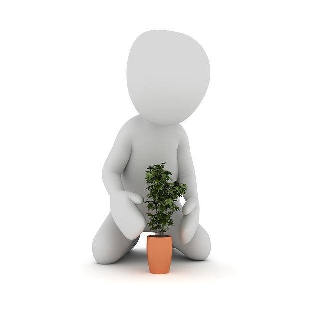 plant-1020159_640.jpg