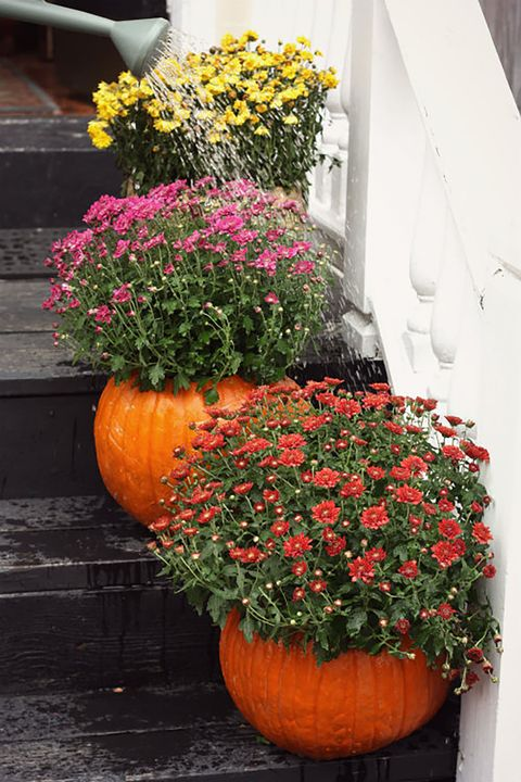 How to use pumpkins in your home. to decorate. Three large pumpkins on black porch stems. Each pumpkin has a different colored mum flower plant. Yellow, pink and red.