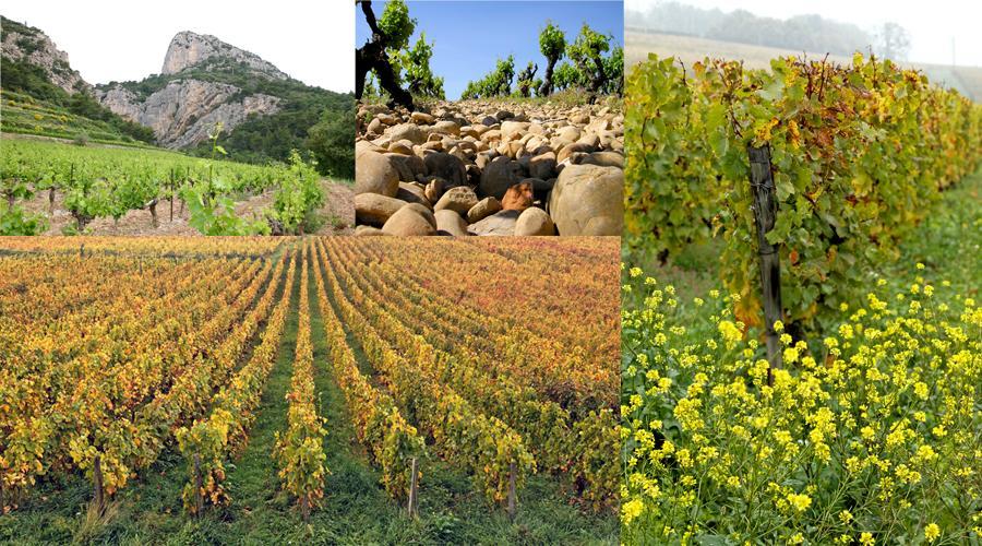Origine Wine Philippines