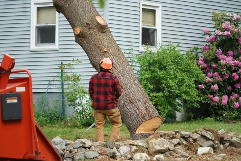 Tree Services That Keep Your Yard and Home Safe