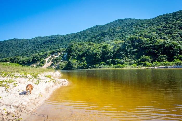 Lagoinha do Leste, Brasil