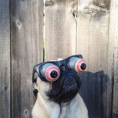 pug-wearing-funny-glasses-620x.jpg
