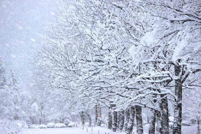 「寒い冬」の画像検索結果