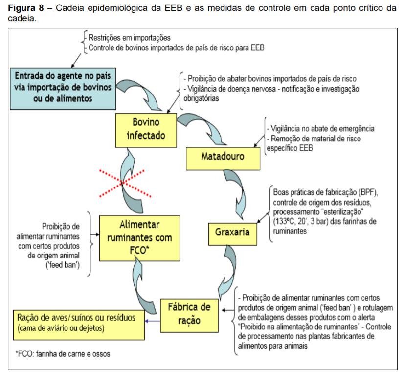 EEB - Cadeia epidemiológica e medidas de controle