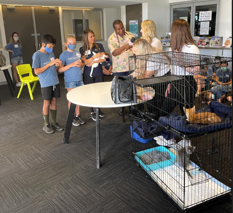 a group of children, people and kittens in cages