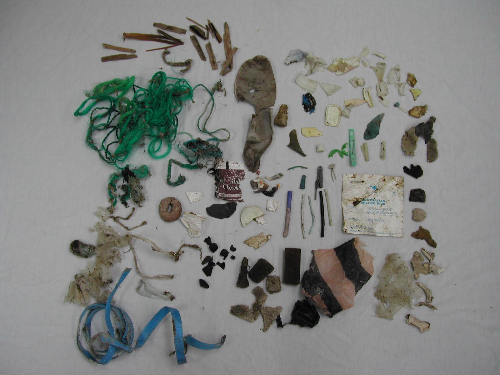 trash from the stomach of a loggerhead turtle