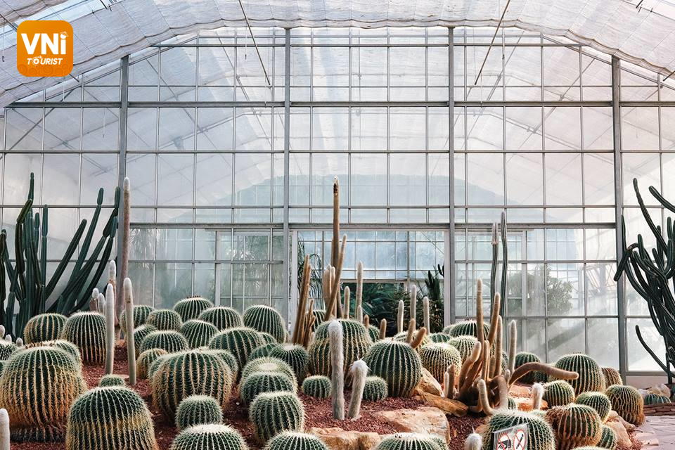 Ba Vi National Park - Cactus greenhouse