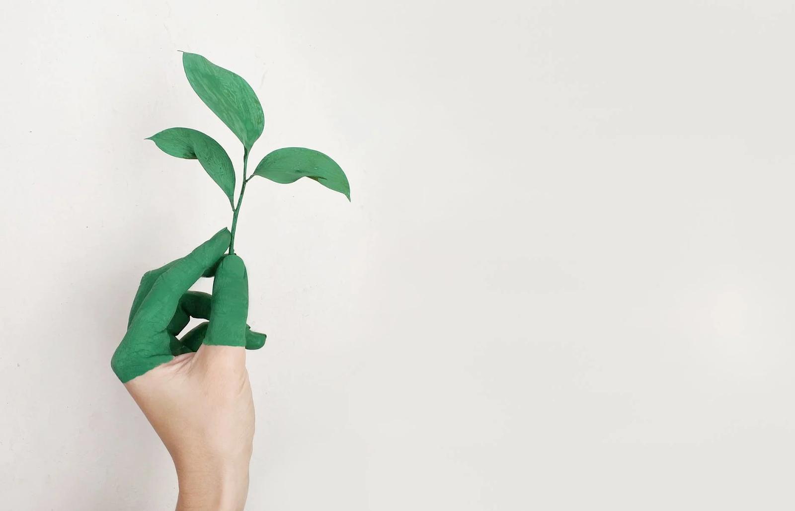 Benefícios de cultivar plantas no apartamento