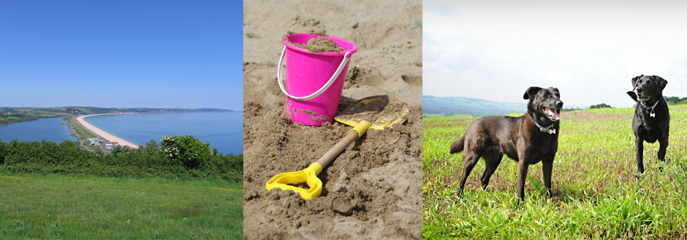 Enjoy the beaches this winter with your canine companion while staying with Devon Farms.