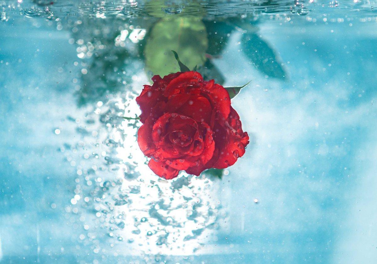 rose water as homemade eye drops