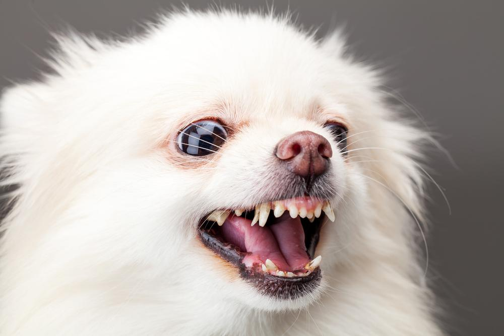 A close up of a dog head posing for the camera  Description automatically generated