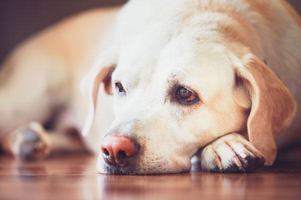 Is my dog ill? - Greenside Animal Hospital - Greenside Animal Hospital
