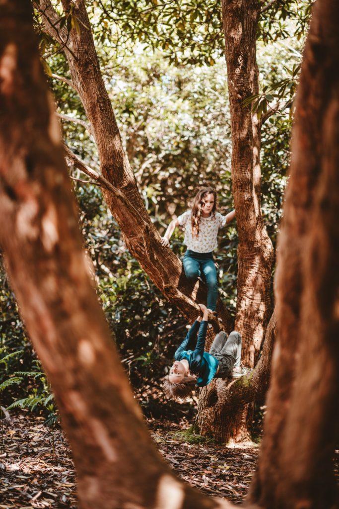 vacances dans l'arbre