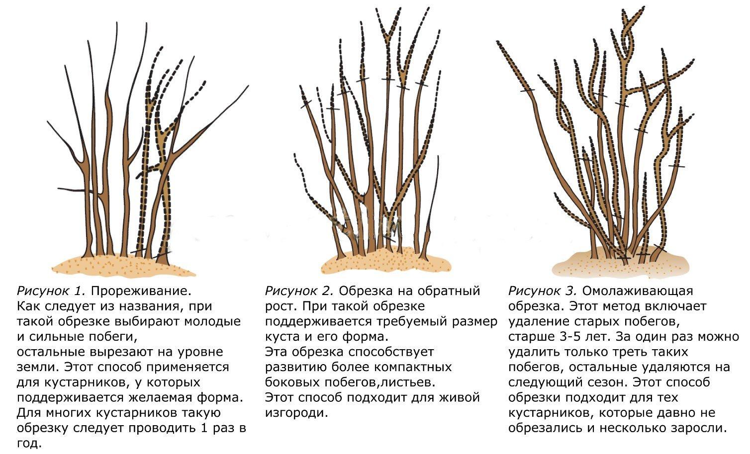 Схемы обрезки