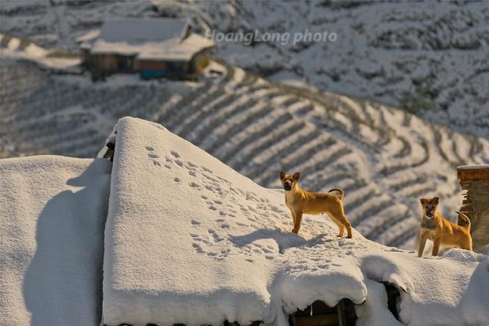 Tuyết phủ trên từng nóc nhà Sapa