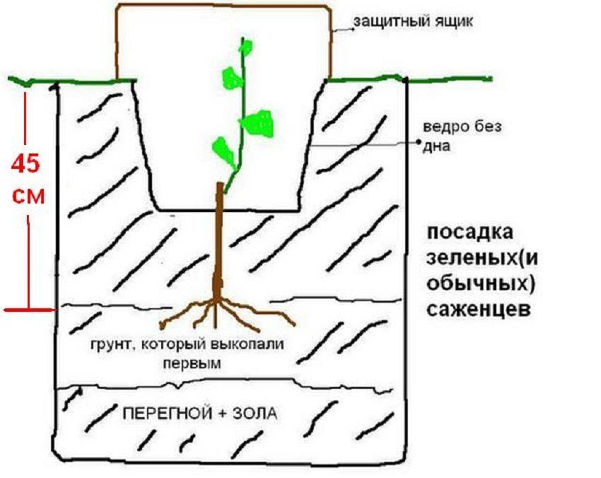 Посадка зеленых (и обычных) саженцев