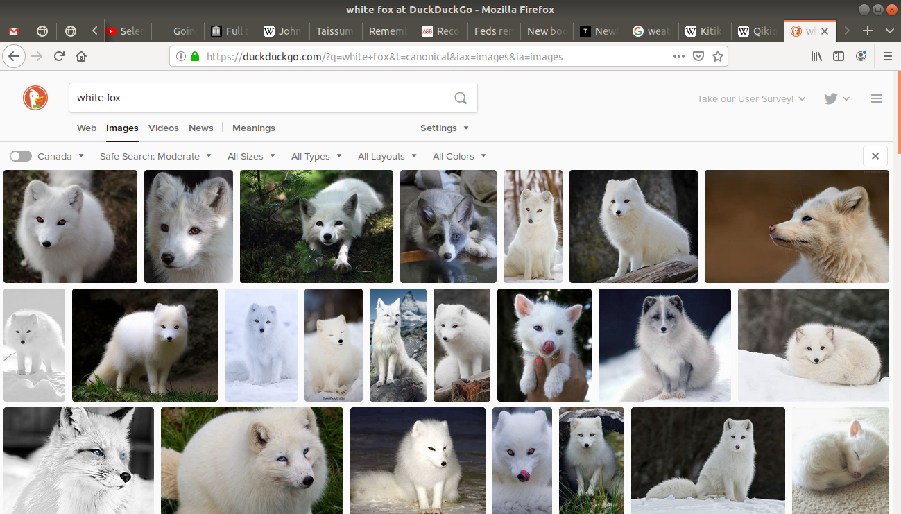 "images tab open from the search of ""white fox"""