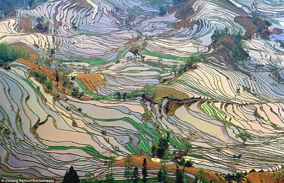 مصاطب الأرز المنحوتة باليد على المنحدرات. dBWmlYJ_X9jWEl-EjvYP