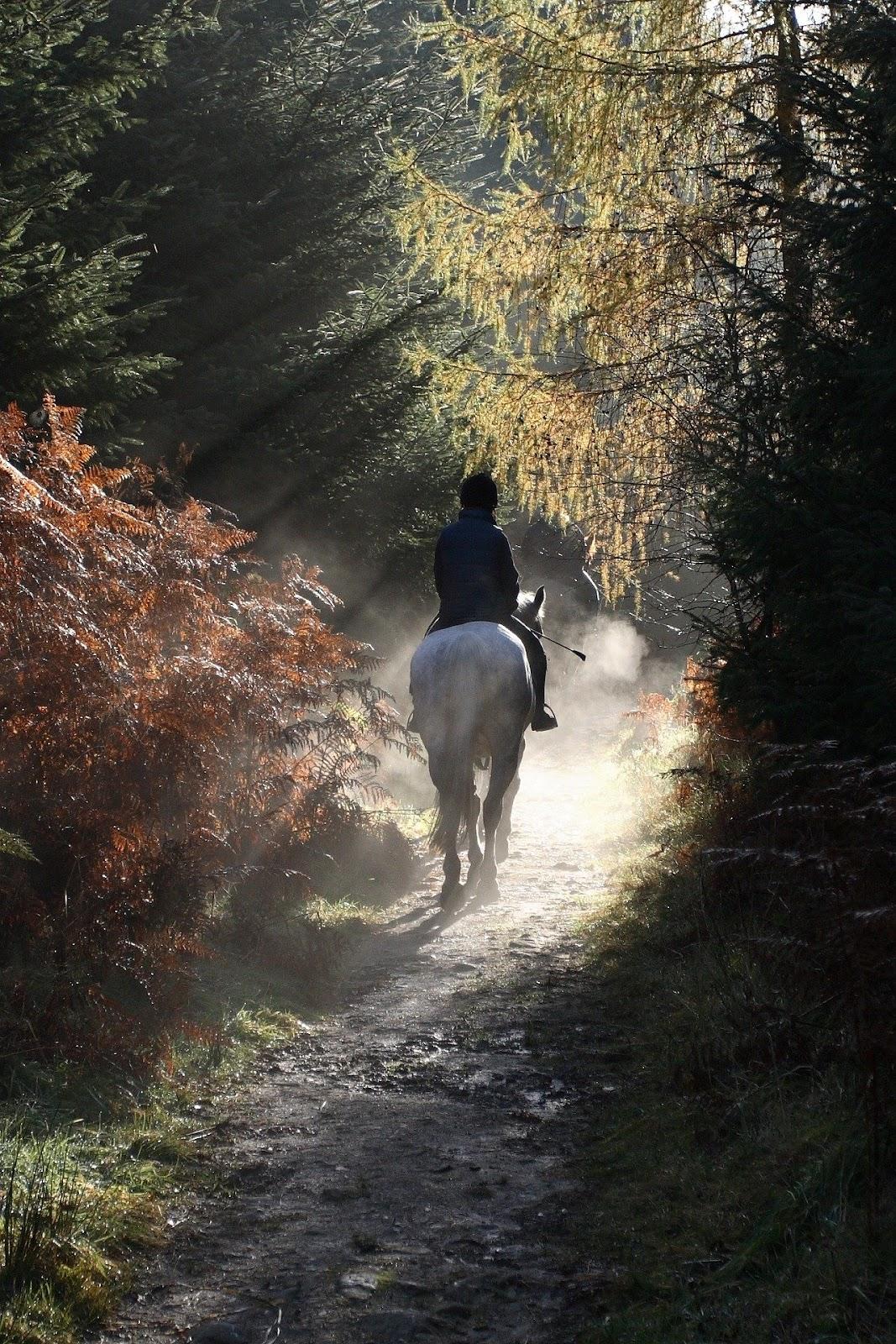 horseback riding through a nature trail