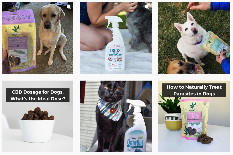 PetFX®   Pet Brands Featured on Afluencer