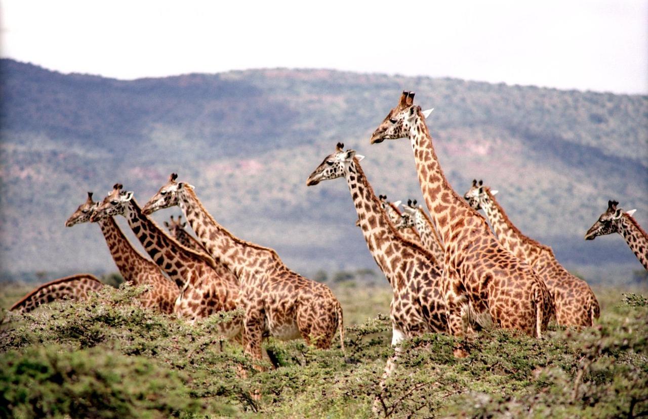 giraffe-657773_1280.jpg