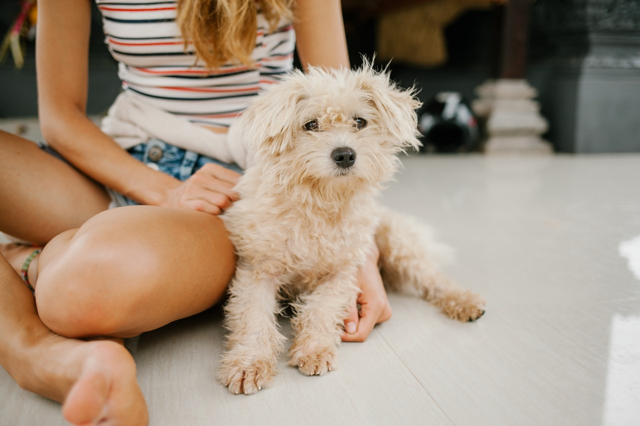 pets after fumigation