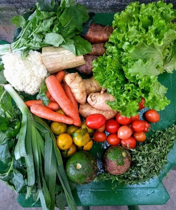 agricultura, sustentável, vegano, vegetariano