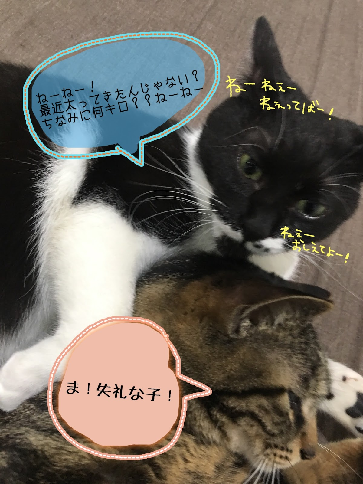 エサの分量と回数に注意!猫の肥満について